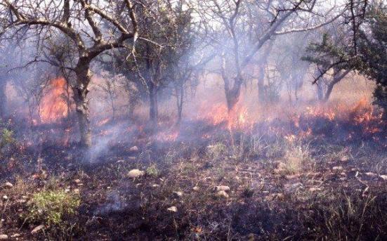 queima antropogênica no país Hadza. Crédito: James F. O'Connell