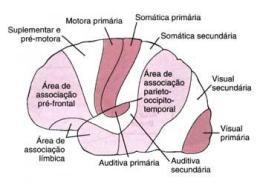Áreas de associação