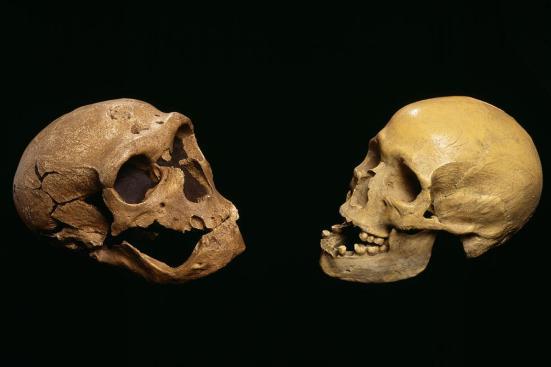 Então, nós dois estamos apenas tão brilhante, mas quem está mais bonito? Pascal Goetgheluck / Science Photo Library