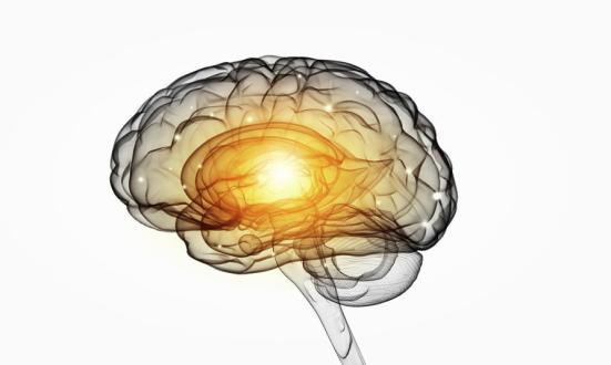 Os pesquisadores descobriram que, em pacientes com, volume cerebral SAD e atividade na amígdala diminuição como resultado da terapia cognitivo-comportamental entregue internet. (Imagem). Crédito: © Sergey Nivens / Fotolia