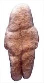 Vênus de Tan-Tan.