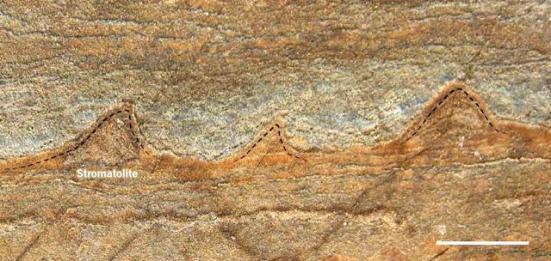 Os cientistas descobriram uma rocha que contem as estromatólitos, pequenas estruturas em camadas de 3,7 bilhões de anos atrás, que são remanescentes de uma comunidade de micróbios que costumavam ser vivo lá. (Allen Nutman / AP)