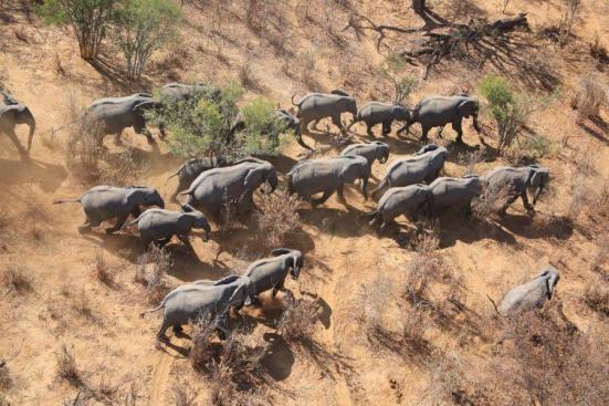 Esta imagem mostra elefantes do ar. Crédito: Kelly Landen