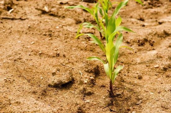 As implicações de plantas que necessitam de menos água com mais dióxido de carbono no ambiente muda suposições dos impactos das mudanças climáticas na agricultura, recursos hídricos, o risco de um incêndio, e o crescimento das plantas, dizem os cientistas. Crédito: © yommy / Fotolia