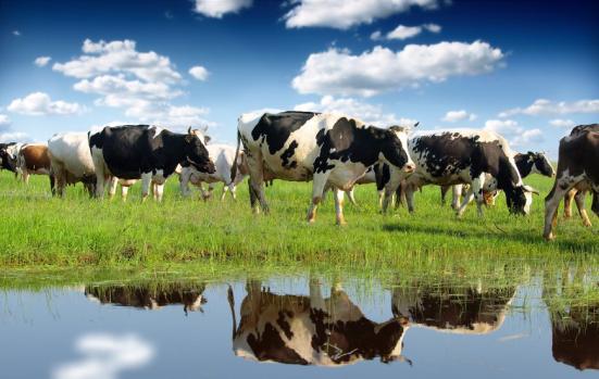 Zonas húmidas e agricultura, não combustíveis fósseis poderia estar causando um aumento global em metano, sugerem os investigadores. Crédito: © Željko Radojko / Fotolia