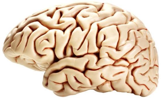 Professor Kim e sua equipe descobriram os mecanismos de uma enzima ativada no cérebro (hipotálamo), que regula o nosso apetite. Crédito: © shutswis / Fotolia