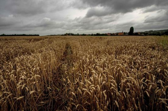 Um campo de trigo em Godewaersvelde França. (Philippe HUGUEN / AFP / Getty Images)