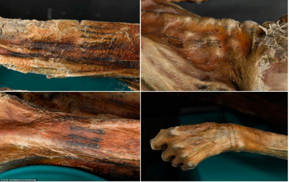 Tatuagens de Ötzi.. Clique para ampliar. Fonte: Museu de Arqueologia do sul do Tiro