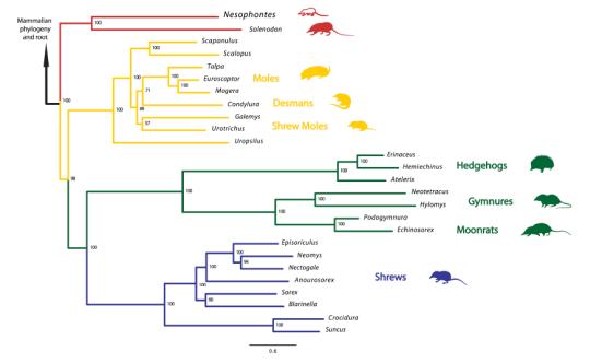 A relação de Nesophontes com outros mamíferos. Crédito: Natural History Museum, Londres, Reino Unido.