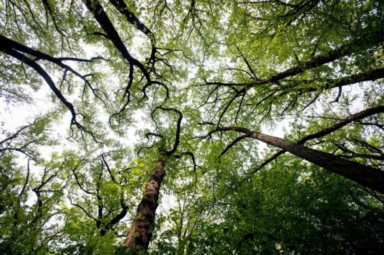 Os ramos de árvore funcionam como arteries através de um dossel verde claro do crescimento novo no parque da angra da rocha maio em 7 em Washington, D.C. (montagem de Bonnie Jo / borne de Washington)