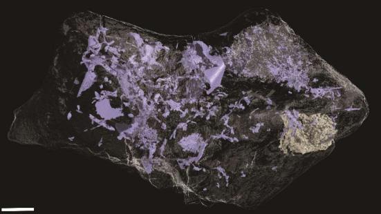Plantas e Animais - Um detalhado scan do cérebro revelou que muitas estruturas menores, intricadas também foram preservadas. Universidade de Cambridge.