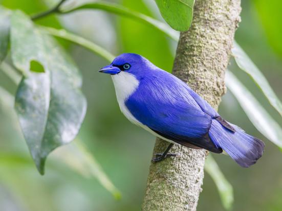 uma das 742 espécies recém-reconhecidas. (© Paul van Giersbergen)