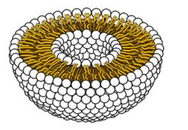 Estrutura interna de um lipossoma (Wikimedia Commons)