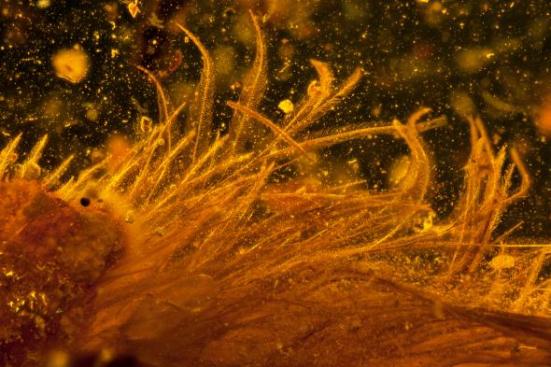 A micro-tomografia computadorizada revela as delicadas penas que cobrem a cauda de dinossauro. Fotografia por Lida Xing