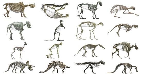 Os cientistas mediram as cavidades corporais de 126 espécies animais, incluindo herbívoros como preguiças, elefantes e estegossauros, bem como carnívoros como leões, lontras e T. rex.