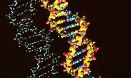 Uma molécula padrão de DNA. Floyd Romesberg e sua equipe têm expandido o código genético de quatro letras para seis, adicionando duas novas moléculas que chamam X e Y. Fotografia: Deco Images II / Alamy / Alamy