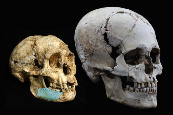 A esquerda um crânio de Homo floresiensis e a direita um crânio de Homo sapiens.