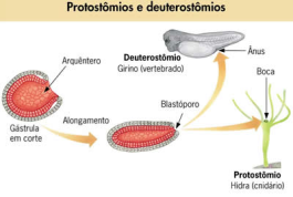 Fonte: SoBiologia