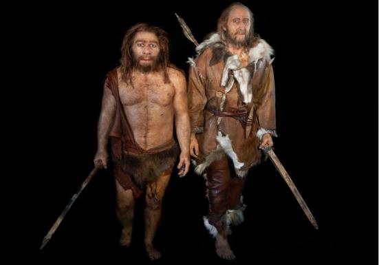 Representação de um Neandertal (esquerda) e um humano (direita)
