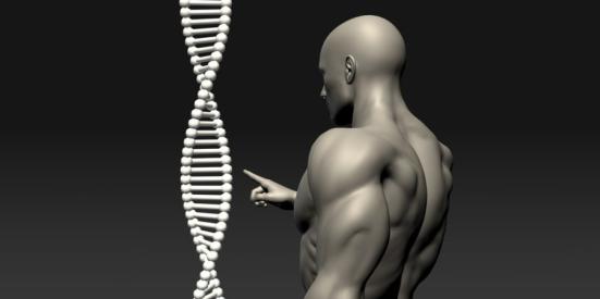 """Um punhado de genes em uma rede recém-descoberta, operando dentro do cérebro neuroendócrino, servem como um """"freio neurobiológico"""" que atrasa até o final da infância a ativação de genes hipotalâmicos responsáveis pelo início da puberdade, impedindo assim o despertar prematuro do processo. Crédito: © kentoh / Fotolia"""