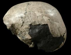 Crânio juvenil de Mojokerto.