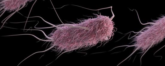 Eles poderiam se comunicar com as bactérias E. coli (foto). Crédito: CDC